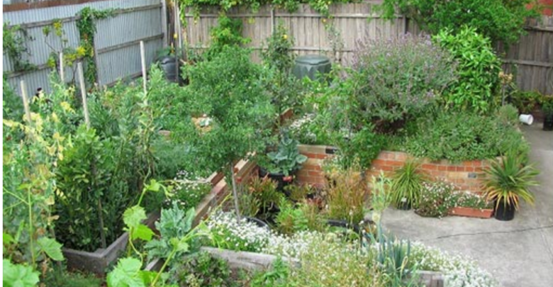 Learn To Transform Your Garden: The Rationale Behind Tree Work