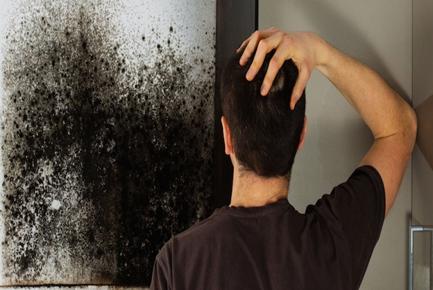 How To Remove Mold From Painted Drywall
