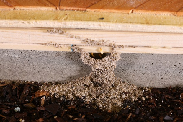Keeping your Round Rock Home Free of Termite Infestations